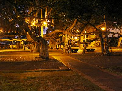 banyan-tree-lahaina-maui-hawaii-night-skips-beach-rentals